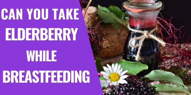 Is it Safe to take Elderberry while Breastfeeding?