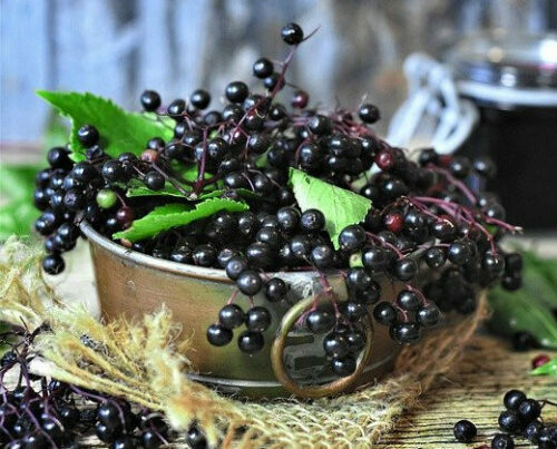 Is it Safe to take Elderberry while Breastfeeding- black elderberry in a stainless steal container